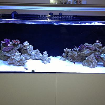 120cm resif akvaryumu
